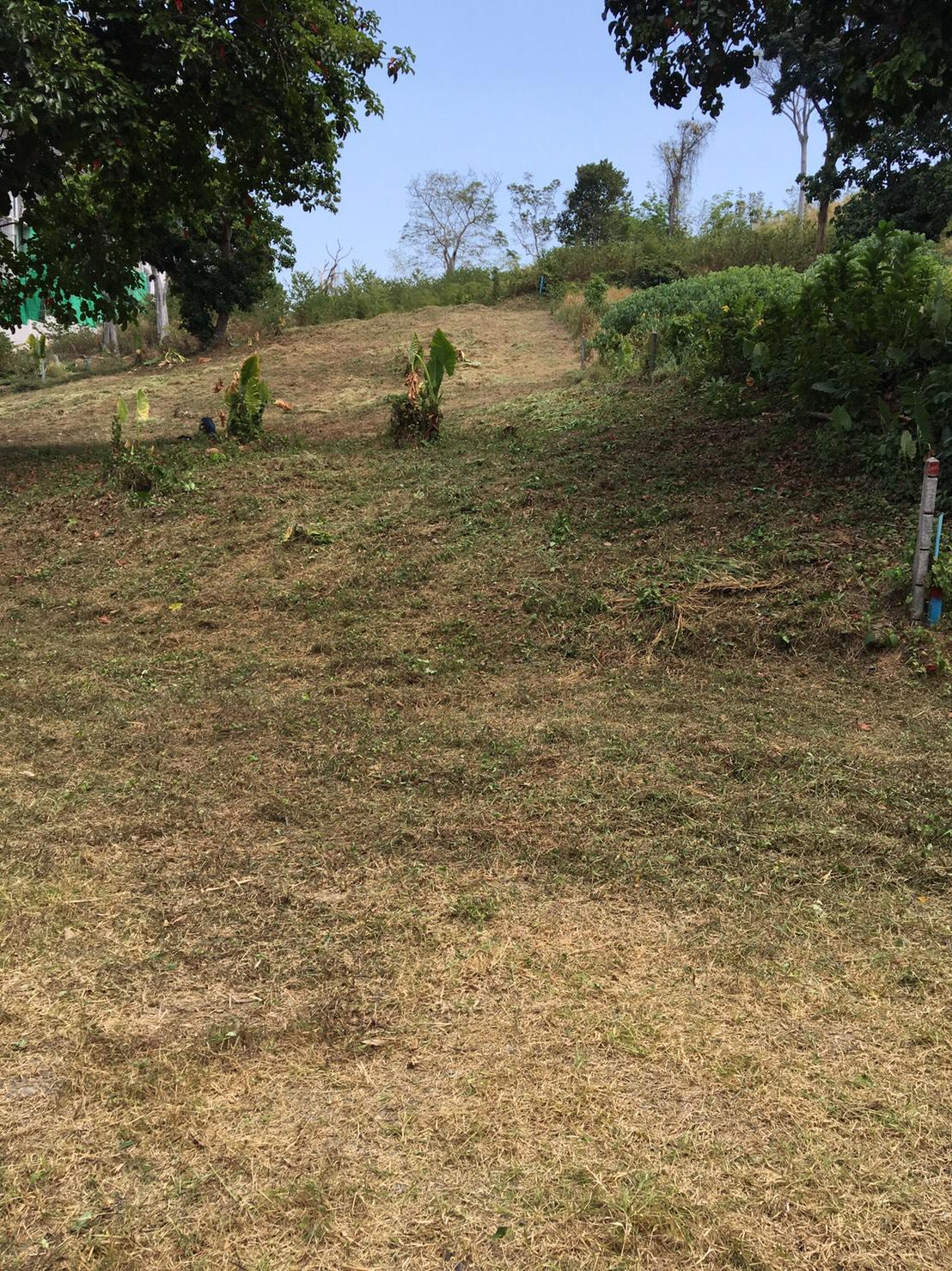 1 Rai Land for sale in Rawai